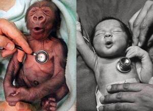 HUMAN BABY AND MONKEY BABY LOOK ALKIE